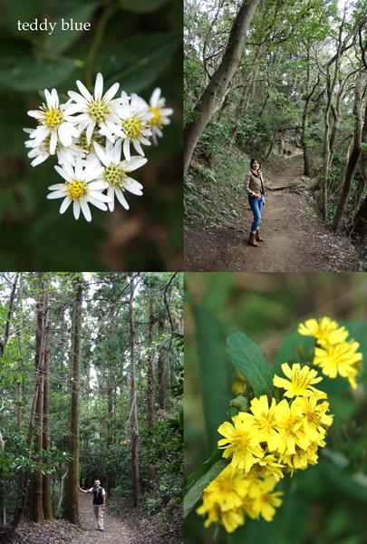 hiking in Kamakura Alps  鎌倉アルプス ハイキング_e0253364_18435767.jpg