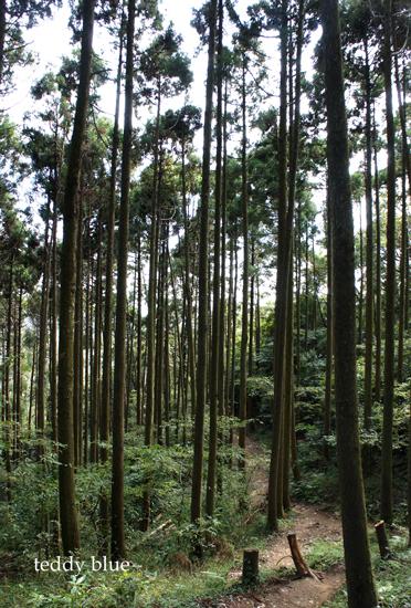 hiking in Kamakura Alps  鎌倉アルプス ハイキング_e0253364_18441343.jpg