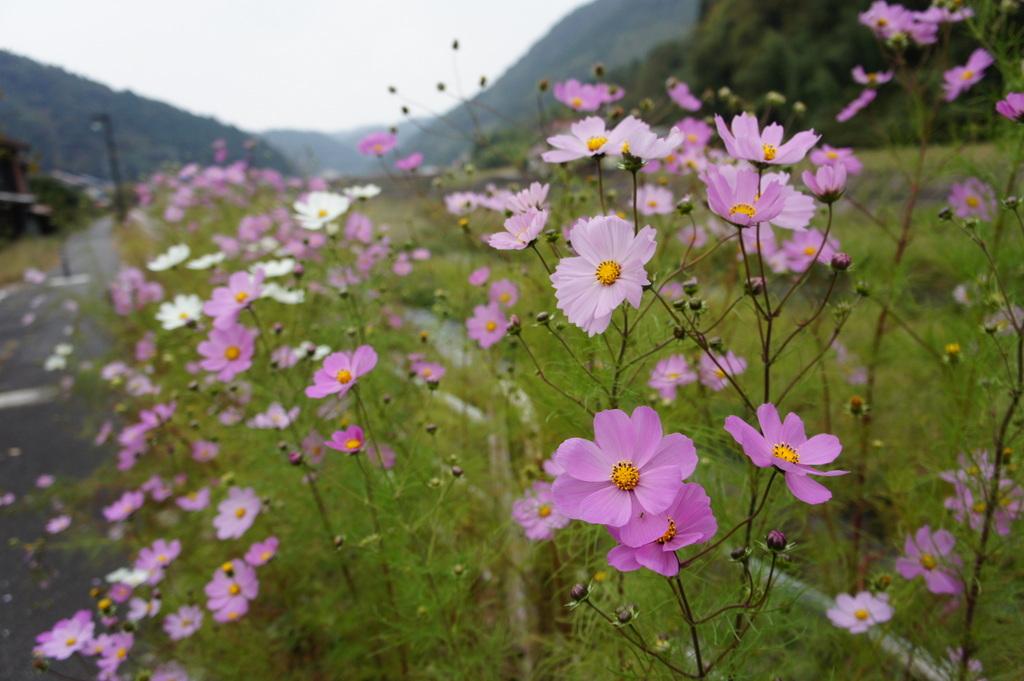 美味しい津和野、イノシシの「げんごろう」_c0180686_810056.jpg