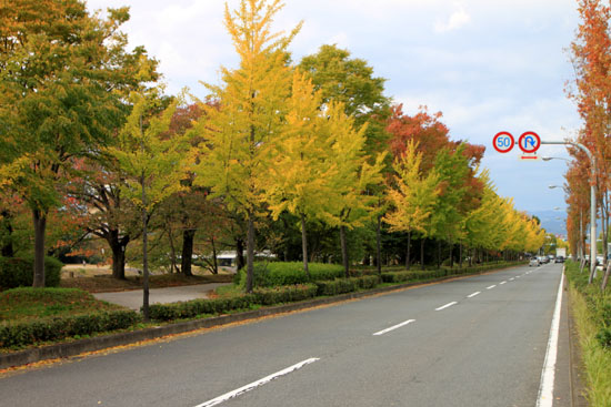 鴨川河畔 黄葉盛り_e0048413_1926420.jpg
