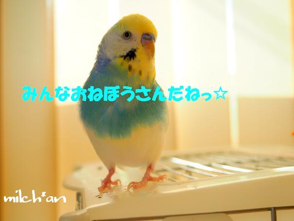 b0115642_164566.jpg