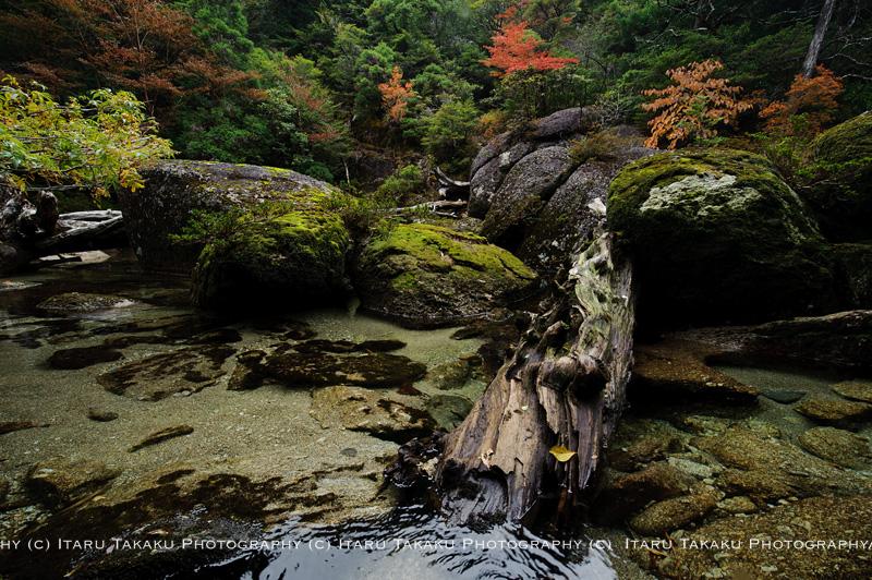 山では紅葉。川遡上!_b0186442_014739.jpg