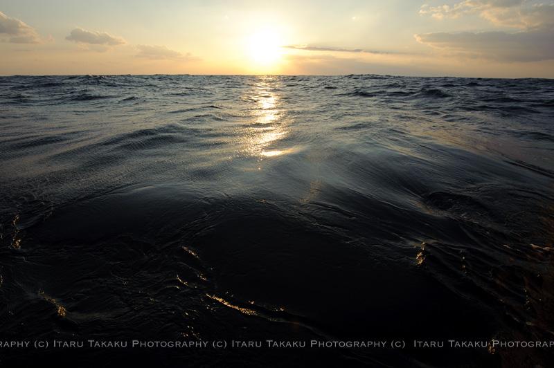 魚飛ぶ海!~トビウオ&トウザヨリ~_b0186442_1352184.jpg