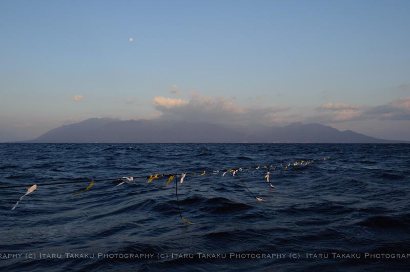 魚飛ぶ海!~トビウオ&トウザヨリ~_b0186442_1352789.jpg