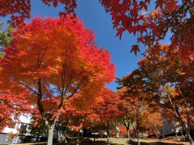 紅葉真っ盛り♪_f0019247_1655659.jpg