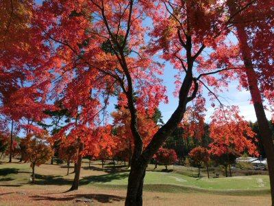 紅葉真っ盛り♪_f0019247_16561515.jpg