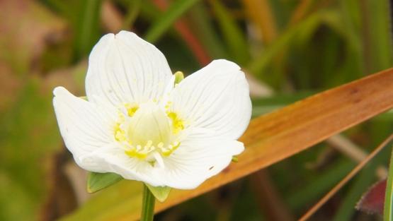 名残の花たち_b0214473_2242235.jpg