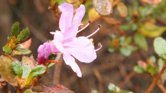 名残の花たち_b0214473_2272880.jpg