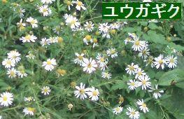 f0069696_1744586.jpg