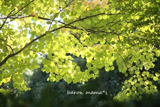 e0264802_2011721.jpg