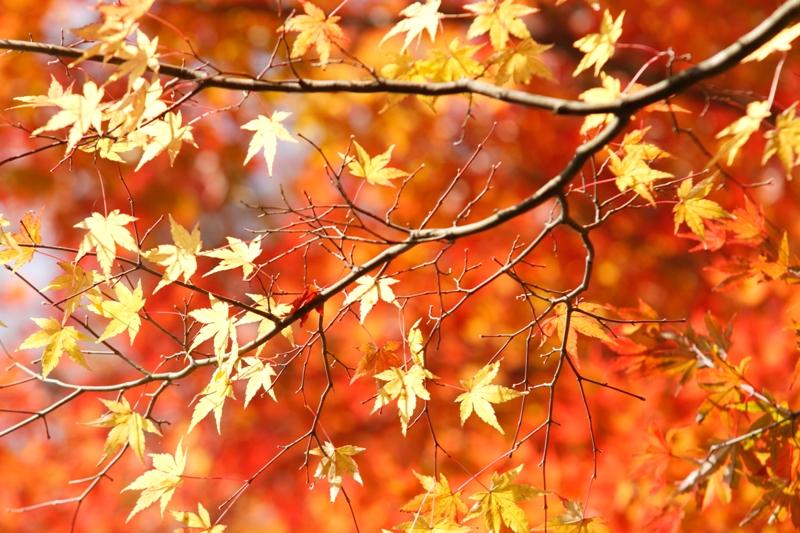 秋だから_f0091207_23543252.jpg