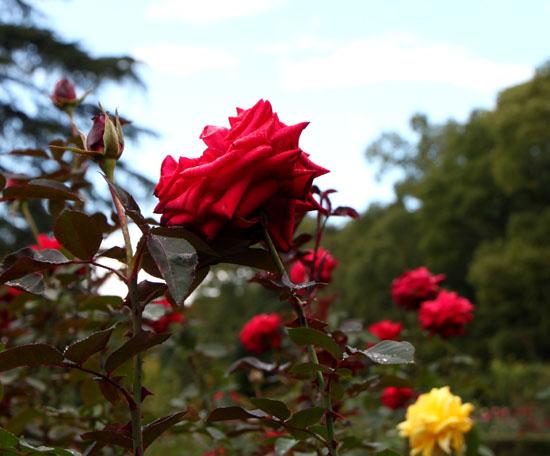 植物園の秋_e0048413_22251587.jpg