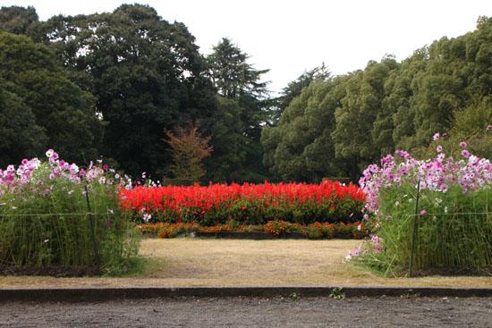 植物園の秋_e0048413_22255365.jpg