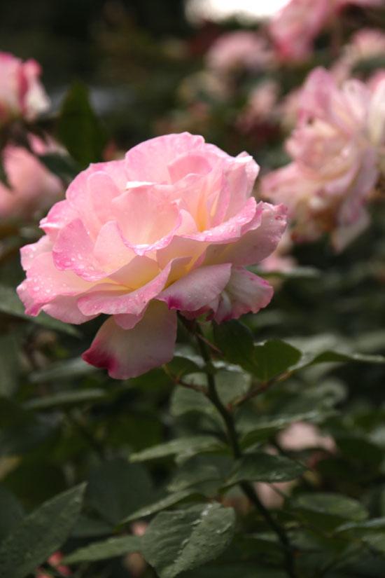 植物園の秋_e0048413_2225587.jpg