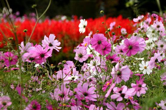 植物園の秋_e0048413_22261143.jpg