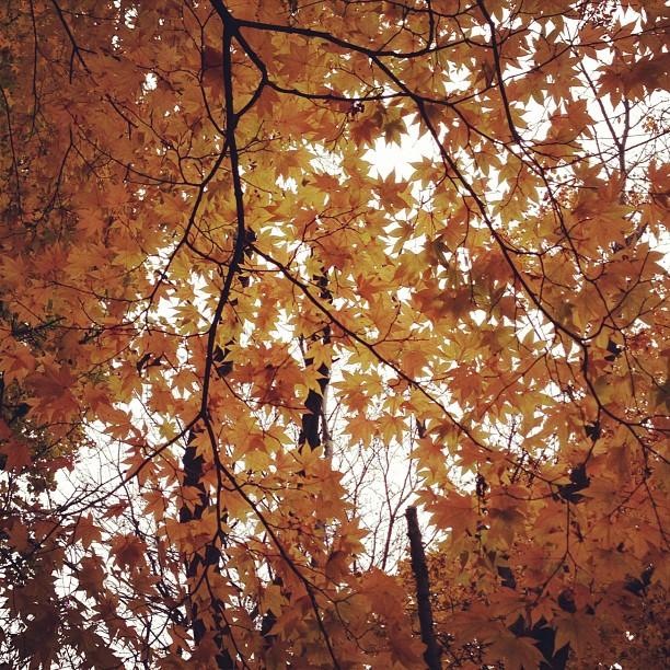 autumn yellow_f0032814_11204841.jpg