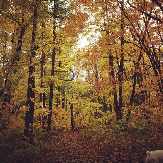 autumn yellow_f0032814_11244246.jpg