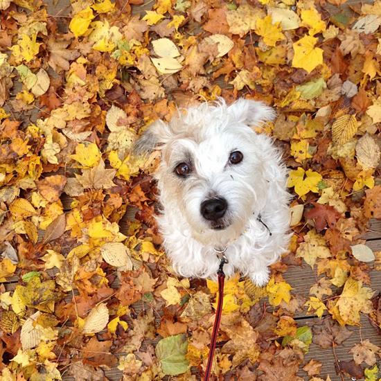 autumn yellow_f0032814_11261894.jpg