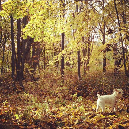 autumn yellow_f0032814_11263276.jpg