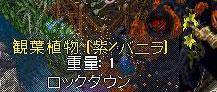c0184233_112854.jpg