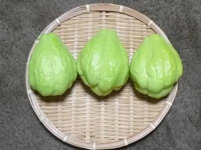 ハヤトウリ初収穫_f0089748_2018574.jpg