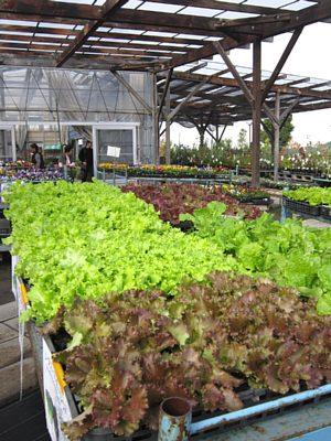 野菜苗も豊富な品ぞろえ_c0141652_17554162.jpg
