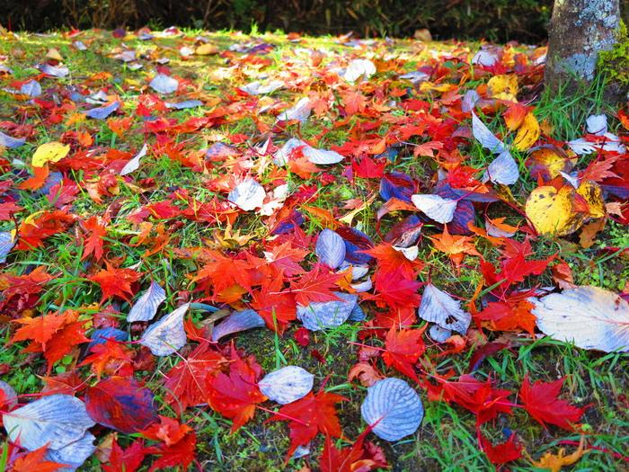 紅葉と釣り。。。。_c0197578_2252731.jpg