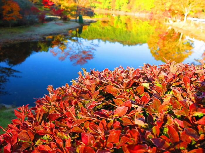 紅葉と釣り。。。。_c0197578_2264145.jpg