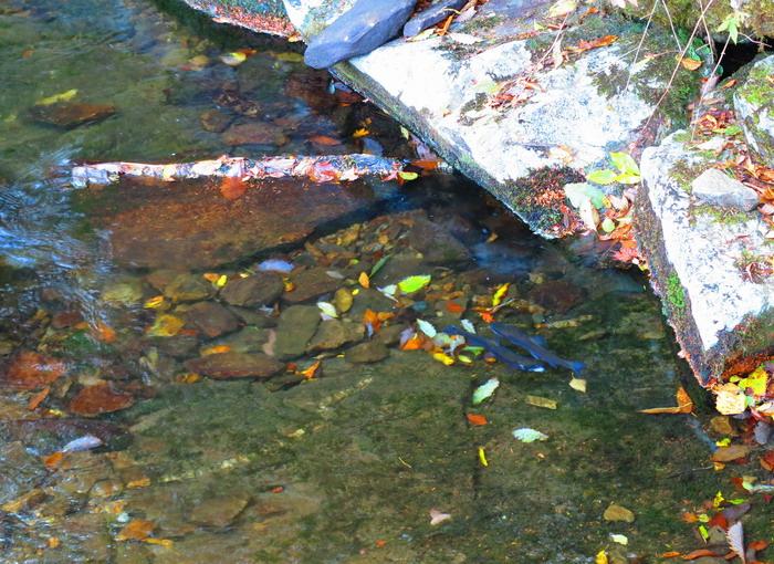 紅葉と釣り。。。。_c0197578_2312343.jpg