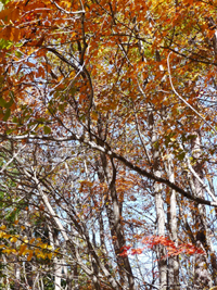 『KASUKE山荘』さん_b0142989_23113535.jpg