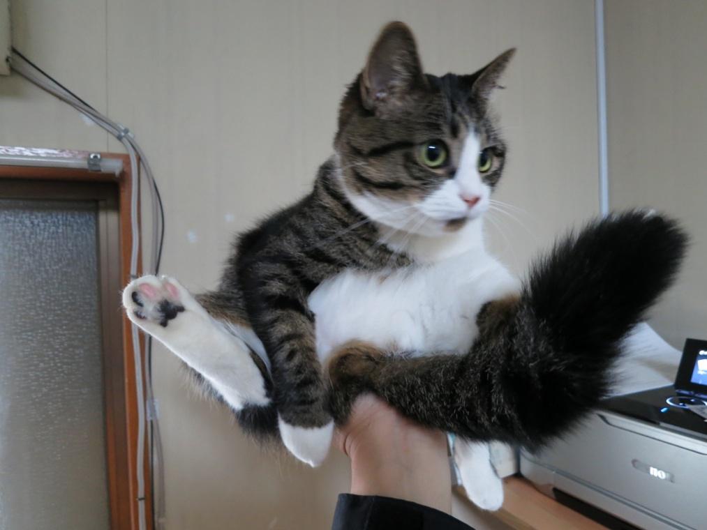 【猫】手乗り_f0141609_00430.jpg