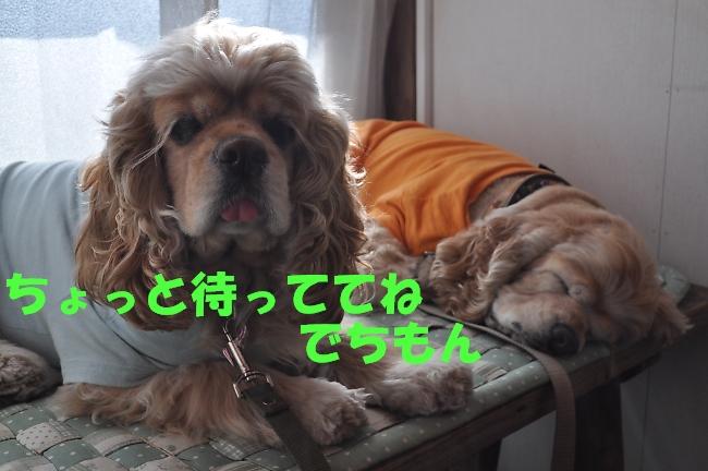 b0067012_2351392.jpg