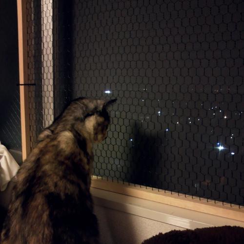 【猫の室内飼いの工夫】窓からの転落防止柵DIY_a0233917_2218537.jpg
