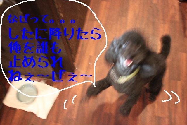 b0130018_955581.jpg