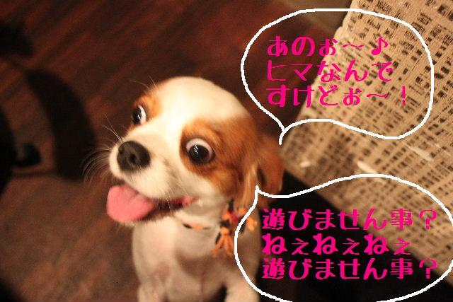 b0130018_9562743.jpg