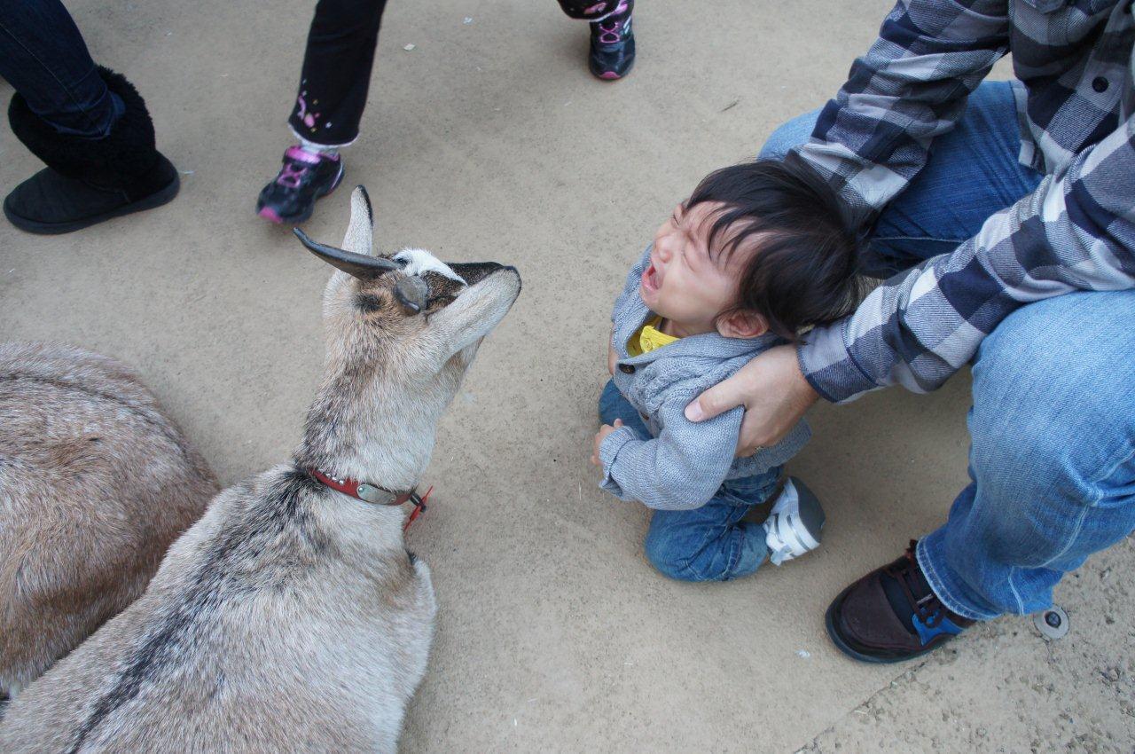 動物園デビュー!_e0253026_0212859.jpg