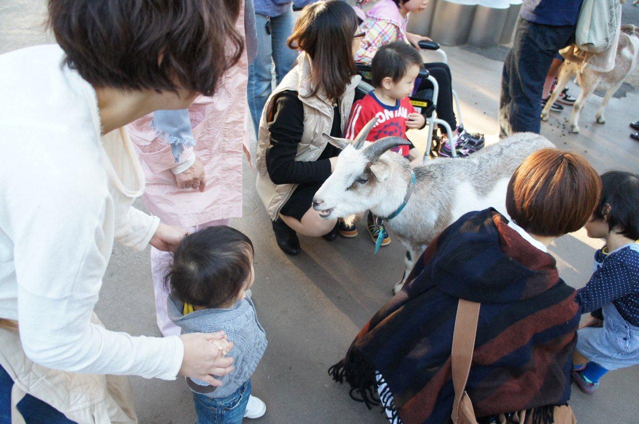 動物園デビュー!_e0253026_021674.jpg