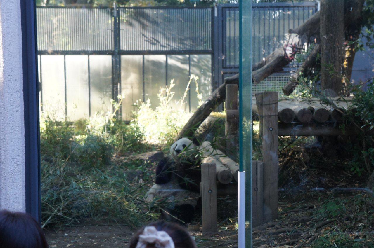 動物園デビュー!_e0253026_095543.jpg