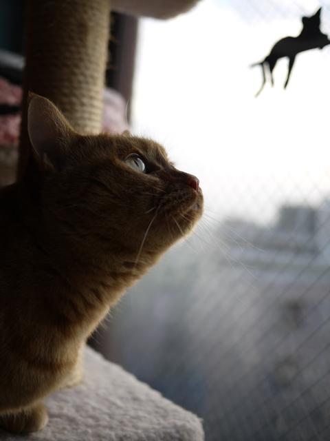 鳥さんがいる猫 しぇる編。_a0143140_20512123.jpg