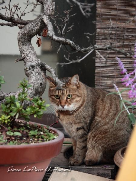 猫のいる風景  秋の雰囲気の中 置物か!_b0133053_0165350.jpg