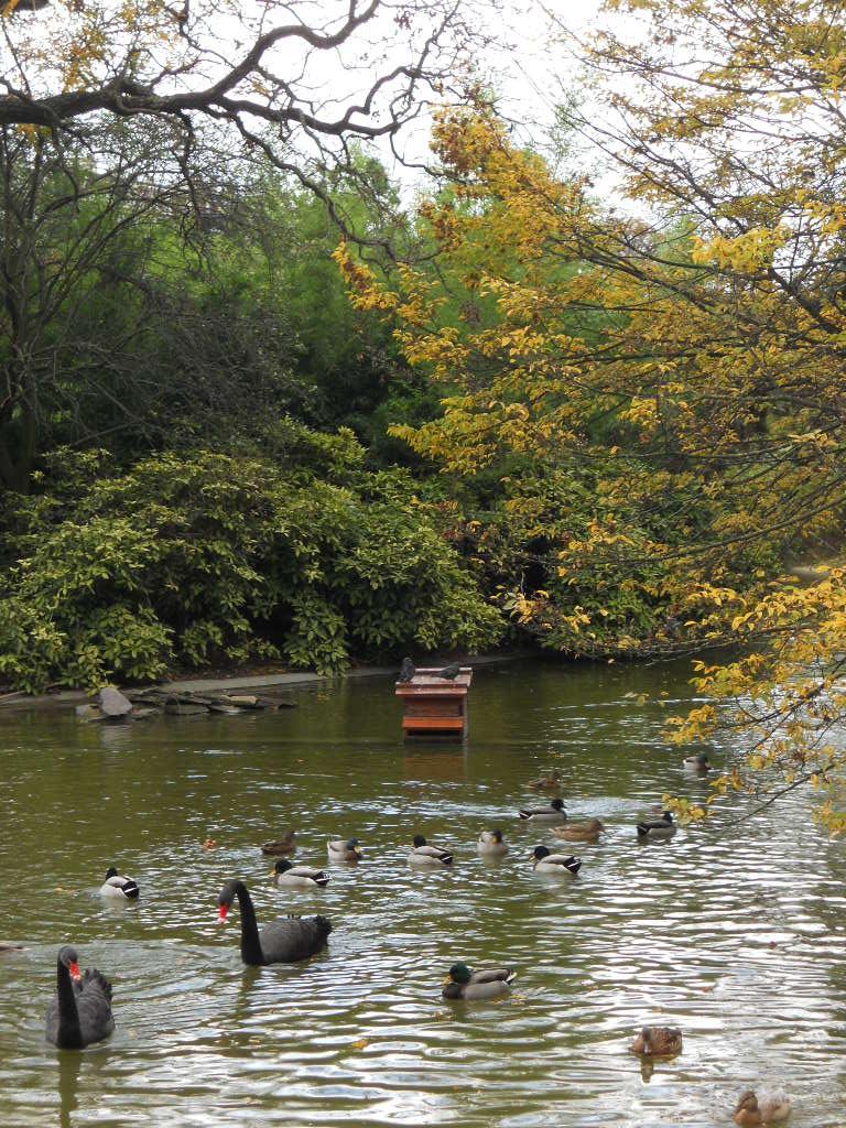 パリの秋_a0066869_2051320.jpg