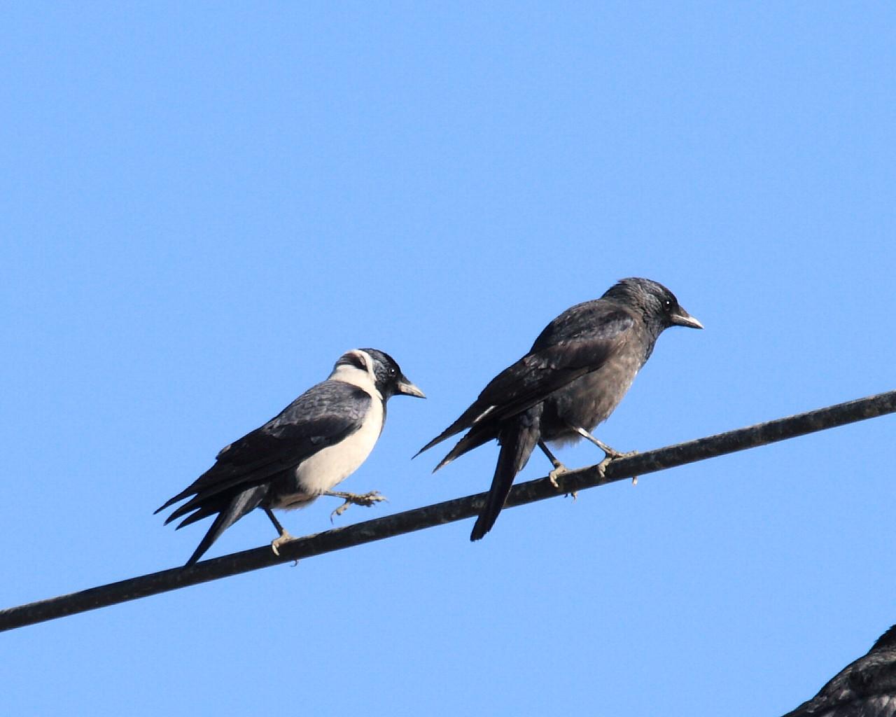 神奈川県では珍鳥?_f0105570_21303848.jpg