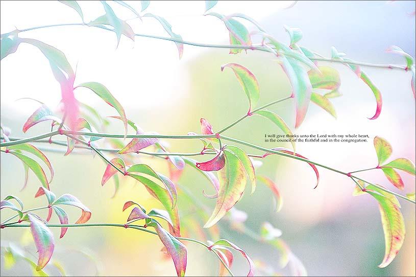 f0198771_0124023.jpg