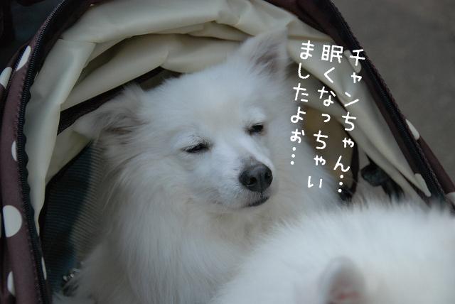 d0113080_20135936.jpg