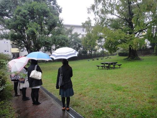 大雨の中、団地視察_e0201681_1555436.jpg