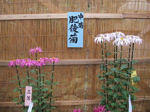 弥彦神社菊祭り・新潟県菊花展覧会(14)_c0075701_7362312.jpg