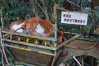 栄養士の表現力、琵琶湖に広がる。_d0046025_1485585.jpg