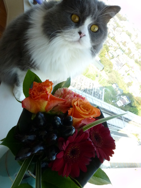 花束とネコ_e0237625_22283189.jpg
