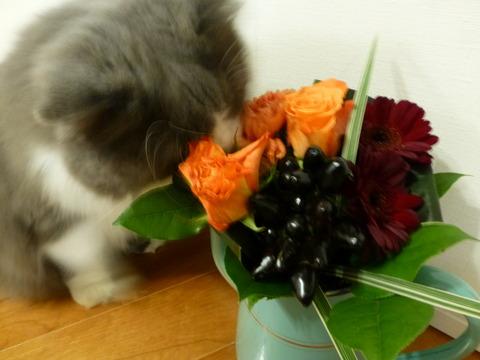 花束とネコ_e0237625_22292444.jpg
