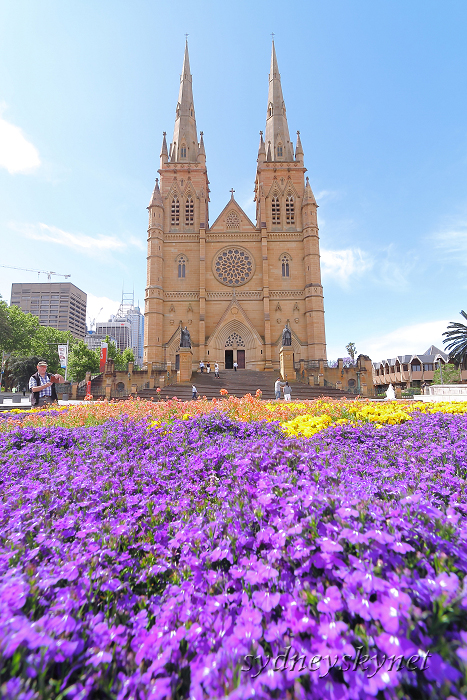 花と大聖堂_f0084337_2123980.jpg
